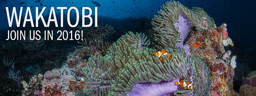 Wakatobi Expedition: September 19 � 30, 2016