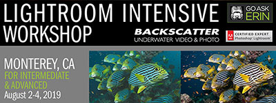 GoAskErin Intensive Lightroom for Intermediate/Advanced - Monterey, CA - August 2-4, 2019