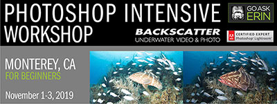 GoAskErin Intensive Photoshop for Beginners - Monterey, CA - November 1-3, 2019