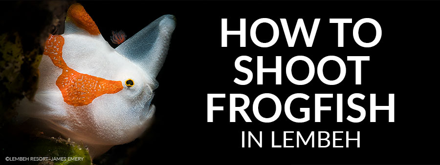 Kermit These Frogfish Tips To Memory.