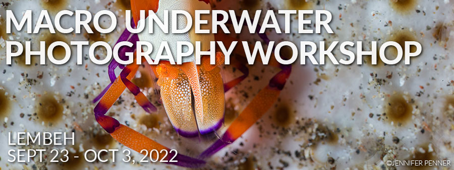 Lembeh, Indo - Sept 23 - Oct 3, 2022