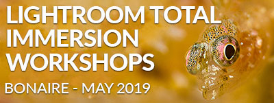 Lightroom Total Immersion Workshop in Bonaire - May 11-18/18-25, 2019