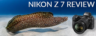 Nikon Z 7 Underwater Camera Review