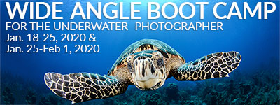 Wide Angle Boot Camp - Little Cayman - Jan 18-25 & Jan 25-Feb 1, 2020