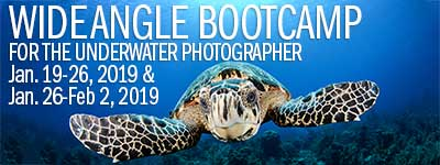 Wide Angle Underwater Photo Boot Camp - Jan. 19-26 & Jan. 26-Feb. 2, 2019