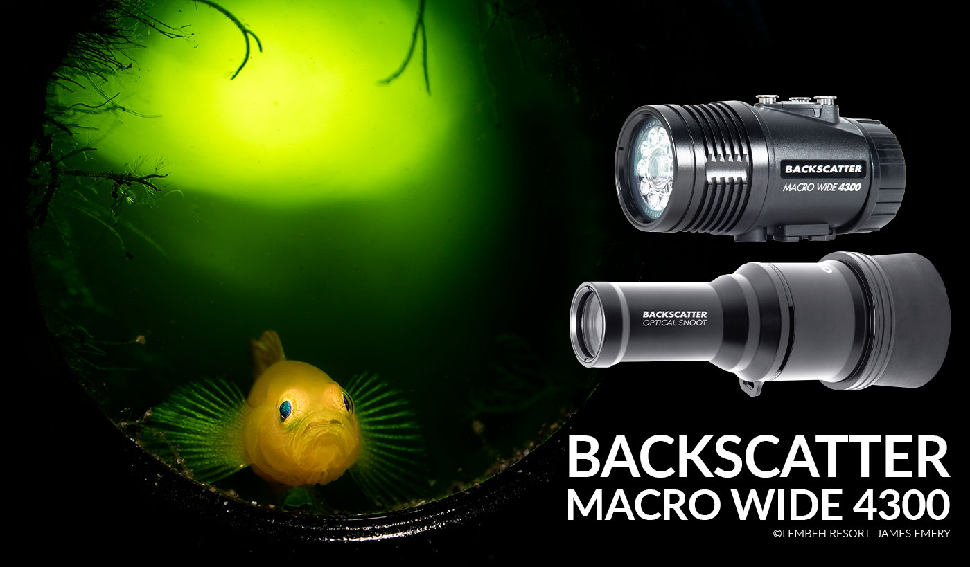 ©James Emery - Backscatter Macro Wide 4300 - Gobe in bottle