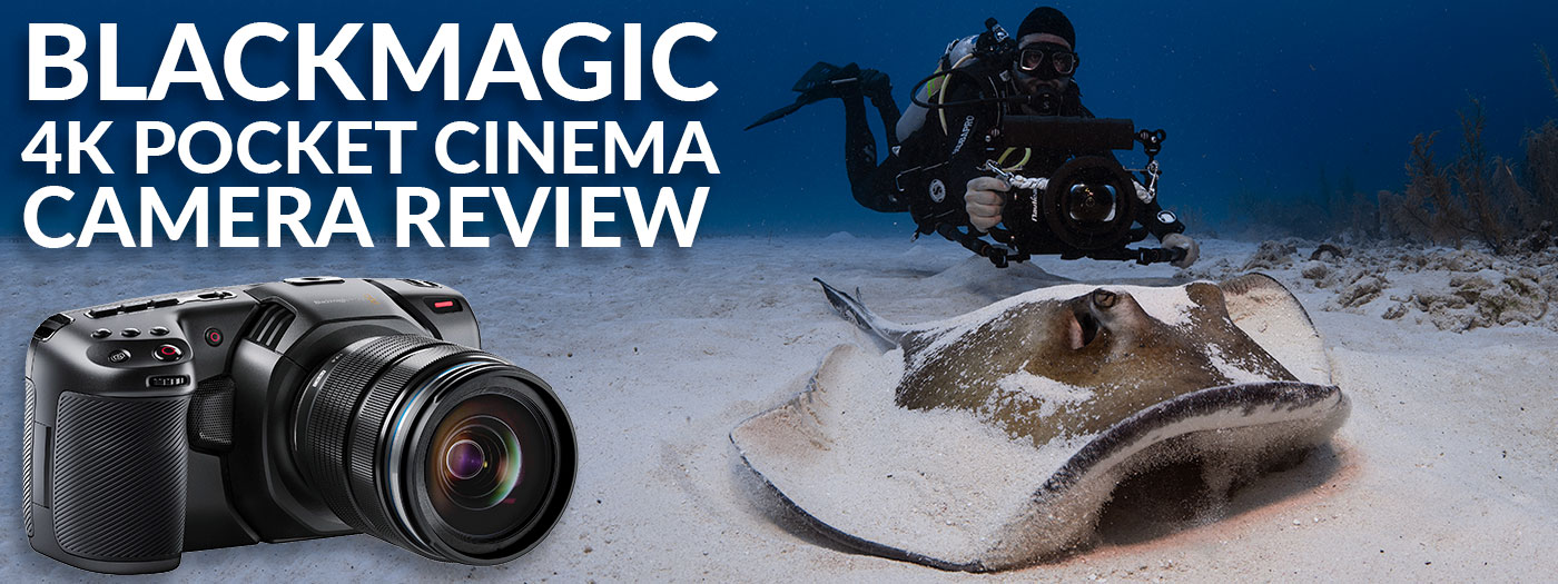 Blackmagic Design Pocket Cinema 4k Underwater Camera Review Underwater Photography Backscatter