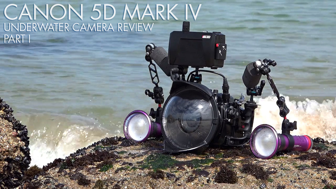 Canon 5D Mark IV Underwater Camera Review