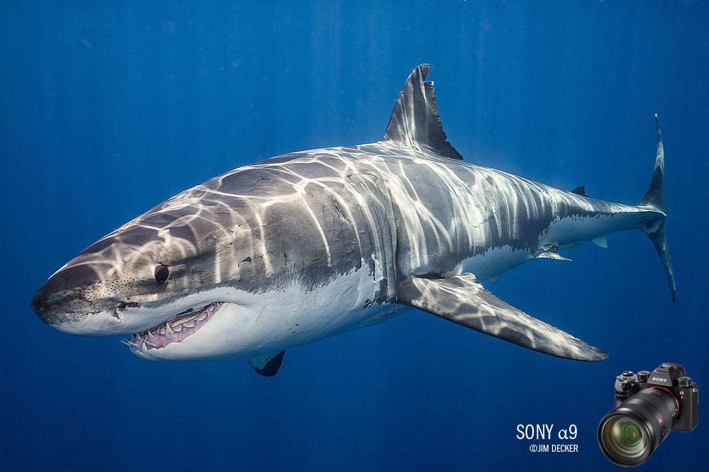 Sony a9 Underwater Camera Review—Shooting Great White Sharks