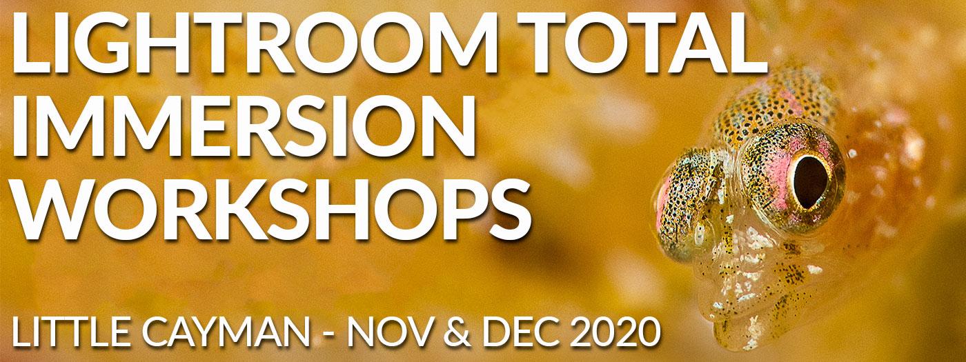 Lightroom Total Immersion Workshop Nov 28 Dec 5 Amp Dec