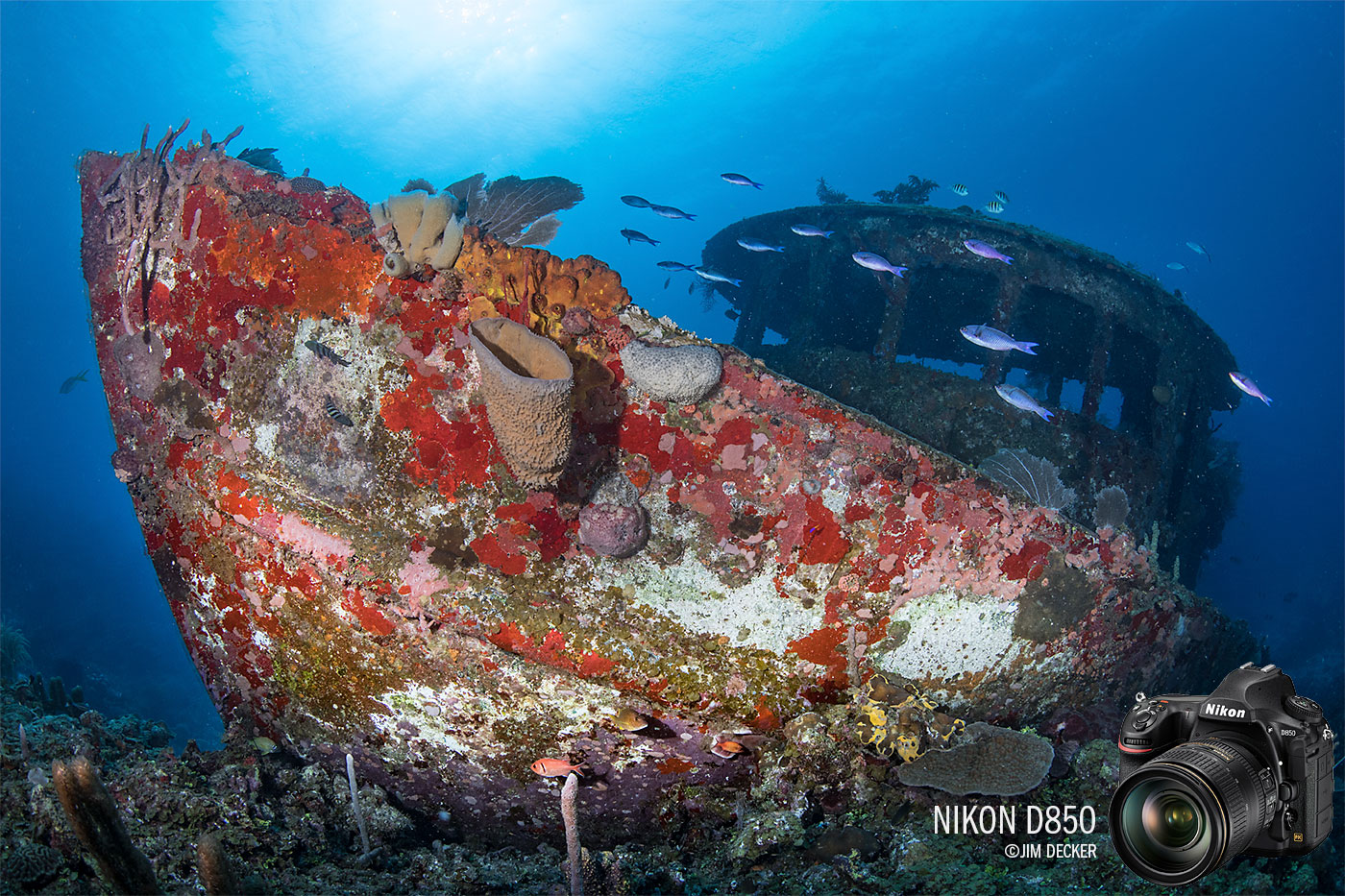 Nikon D850 Underwater Camera Review