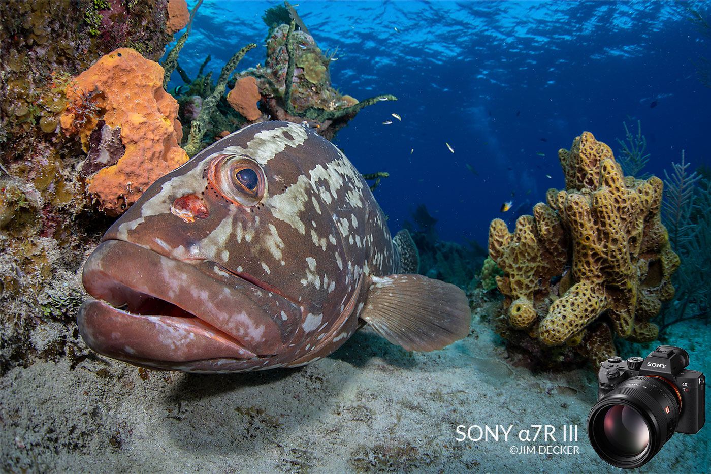 Sony a7R III Underwater Camera Review - Underwater Photography