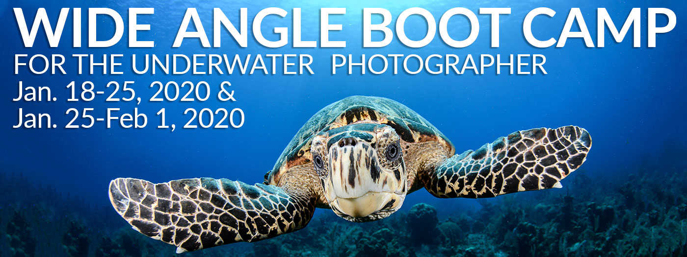 Wide Angle Underwater Photography Boot Camp - Little Cayman - Jan 18-25 & Jan 25-Feb 1, 2020