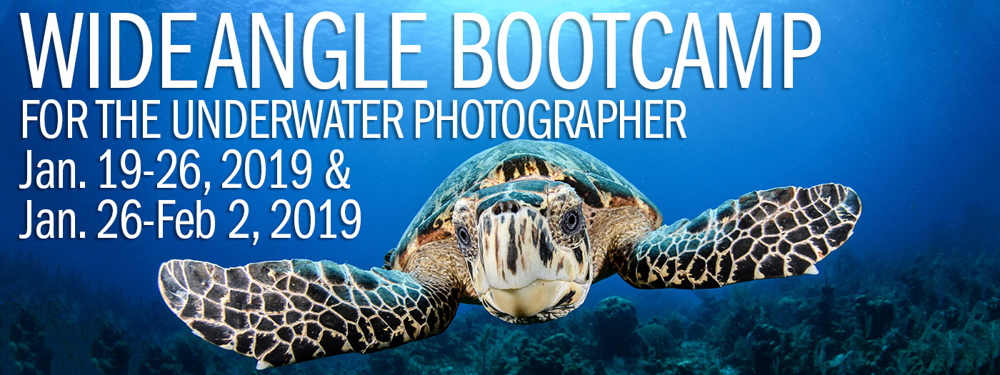 Wide Angle Underwater Photography Boot Camp – Little Cayman – January 19-26 & January 26-February 2, 2019