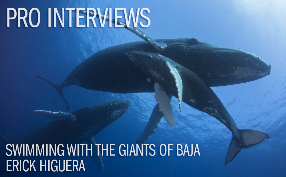 Swimming With The Giants Of Baja with Erick Higuera
