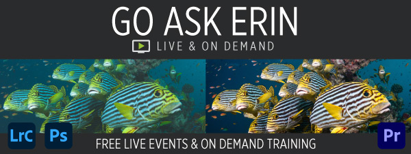 Go Ask Erin - Free Live Events and On Demand Training