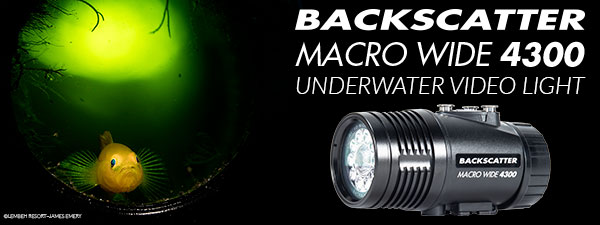 Best Underwater Video Light - The Backscatter Macro Wide 4300 Has You Covered