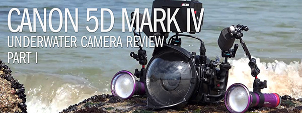 Canon 5D MarkIV Underwater Review