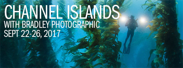 Bradley Photographic & Backscatter Underwater Photography Expedition - Sept. 22-26, 2017