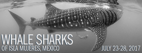 Whale Sharks - Isla Mujeres, Mexico - July 23-28, 2017