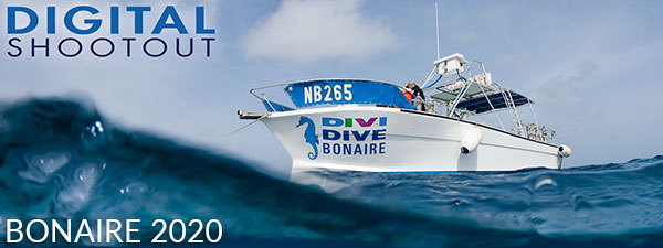 Join Us At the 2020 Digital Shootout in Bonaire - June 6-20, 2020