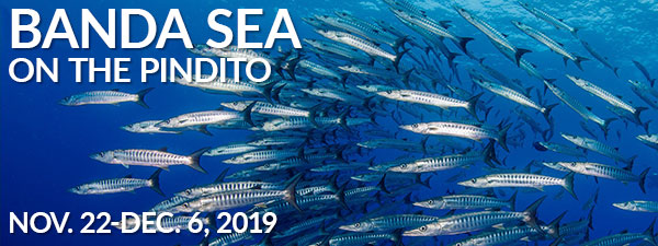 Banda Sea – Forgotten Islands, Indonesia – Pindito Nov 22 – Dec 6, 2019