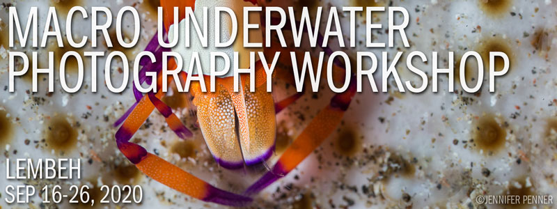 MACRO UNDERWATER PHOTOGRAPHY WORKSHOP - LEMBEH RESORT – INDONESIA - SEPTEMBER 16-26, 2020
