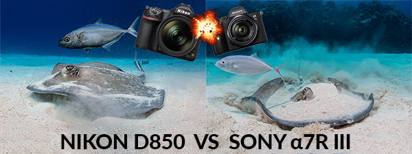 Nikon D850 DSLR Camera VS Sony a7R III Mirrorless Camera Underwater Comparison