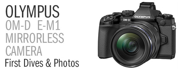 Olympus OM-D E-M1 Camera Review - First Dives and Photos