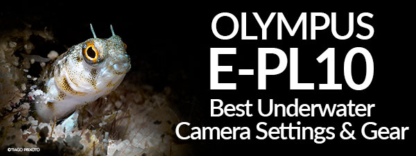 Olympus PEN E-PL10 Best Underwater Camera Settings & Gear