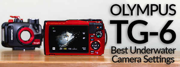 Olympus TG-6 Best Underwater Camera Settings