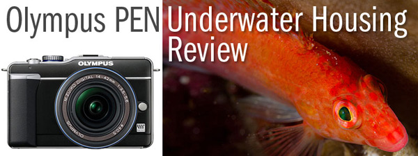 Olympus PEN E-PL1 & PT-EP01 Underwater Housing Review