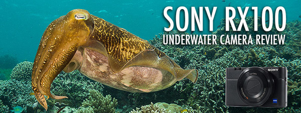 Sony RX100 Underwater Camera Review