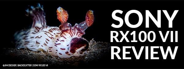 Sony RX100 VII Underwater Camera Review
