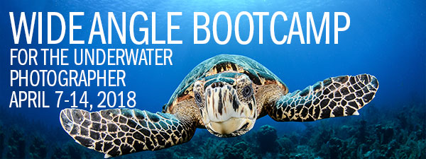 Wide Angle Underwater Photography Boot Camp – Little Cayman – April 7-14, 2018