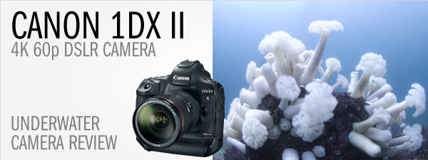 Our Favorite Underwater Camera? - Canon 1Dx Mark II Review
