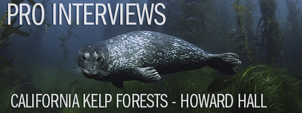 Pro Interview - Howard Hall on California Kelp Forests