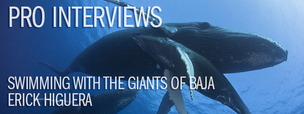 Pro Interview - Erick Higuera on Swimming with the Giants of Baja
