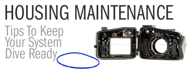 Underwater Camera Housing Maintenance – Tips to keep your investment safe and running...
