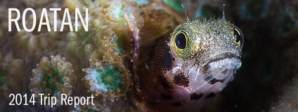 Roatan Underwater Imaging Workshop 2014 - Trip Report
