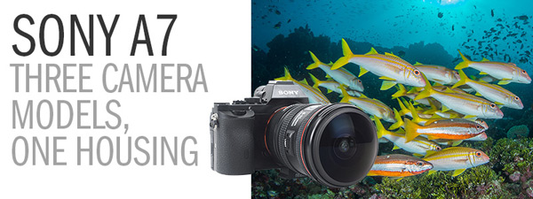 Sony A7 Underwater Camera Review - Three Camera Models, One Housing