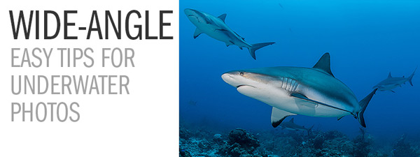 Wide-Angle – Easy Tips for Underwater Photos