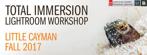 Lightroom Total Immersion Workshop - Intermediate/Advanced - November 25th – December 9, 2017