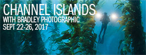 Bradley Photographic & Backscatter Underwater Photography Expedition - Channel Islands 2017