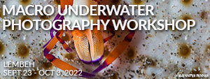 Macro Underwater Photography Workshop - Lembeh Resort – Indonesia - Sept 23 - Oct 3, 2022