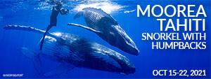 Moorea Tahiti – Snorkel with Humpback Whales – October 15-22, 2021