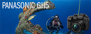 Panasonic GH5 Underwater Camera & Housing Review