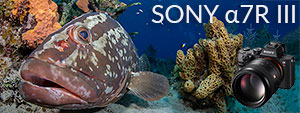 Sony a7R III Underwater Camera Review