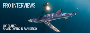 Shark Diving off of San Diego with Joe Platko