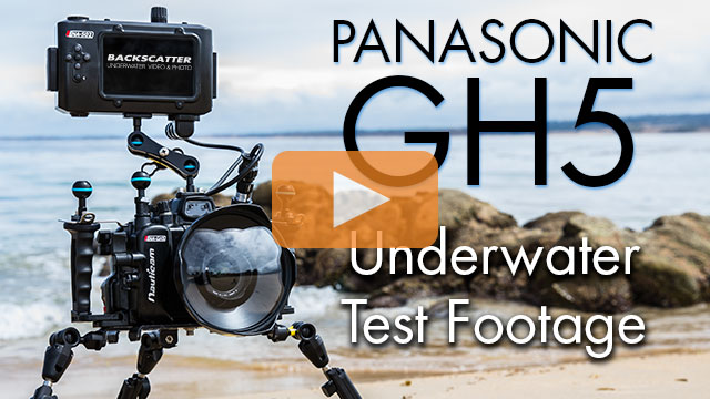 Panasonic GH5 First Dives